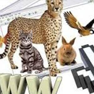 جریمه و حبس در انتظار تبلیغ کنندگان خرید و فروش حیات وحش در فضای مجازی
