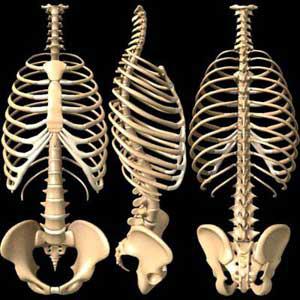 ارتباط مستقیم چاقی و ناهنجاری های قامتی