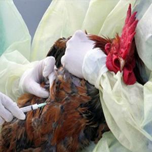 شکار پرندگان وحشی تا اطلاع ثانوی ممنوع