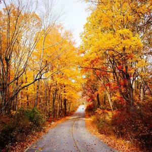 ارزانترین و سالمترین تفریحات در فصل پاییز