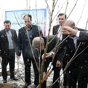 رئیس مجلس در دامنه جنوبی البرز یک اصله نهال غرس کرد+ تصاویر