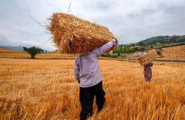 هشدار نسبت به قاچاق گندم به خارج از مرزها