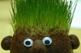 چگونه سبزه هفت سین را خودمان آماده کنیم