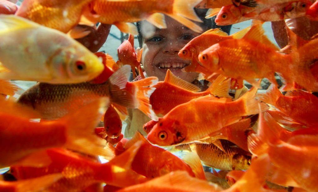 پایان تیتر: ماهی قرمز