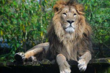 حمله شیر باغ وحش قزوین به یکی از کارکنان جلوی چشمان معاون رییس جمهور