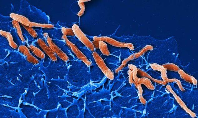 پایان تیتر: باکتری هلیکوباکتری
