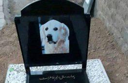 دستگیری ۳ نفر از عوامل دفن یک سگ در قبرستان سنگر رشت + عکس سنگ قبر