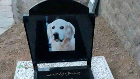پایان تیتر: خاکسپاری سگ