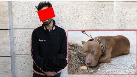 پایان تیتر: حمله سگ