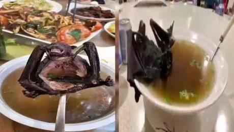 پایان تیتر: سوپ خفاش