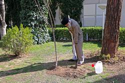 پایان تیتر: درختکاری