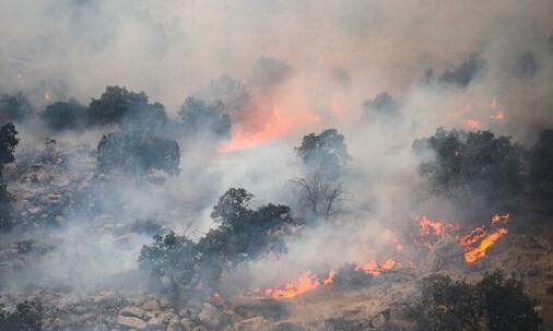 پایان تیتر: آتش سوزی جنگل